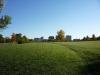 rosamond-field